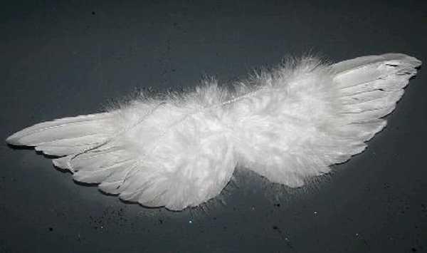 Krídla anjelské 31cm biele